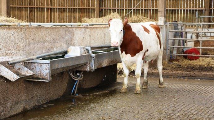 La qualité de l'eau d'abreuvement des animaux doit être analysée et améliorer par un traitement si nécessaire