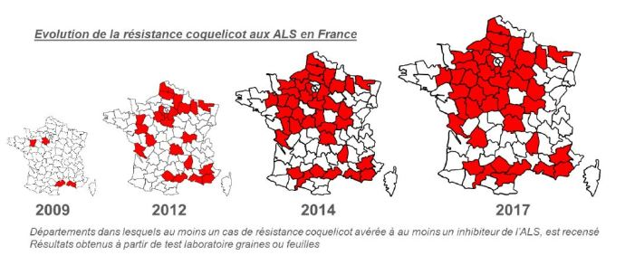 Résistance des coquelicots aux herbicides inhibiteurs de l'ALS en France.