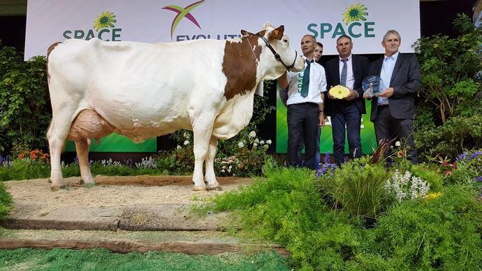 Densité (Ralph Jb x Louksor), meilleure laitière de la race montbéliarde.