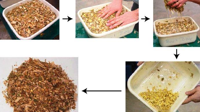 Arvalis préconnise de réaliser le jour de l'ensilage de maïs le test de la bassine pour vérifier l'éclatement des grains et ainsi régler la machine.