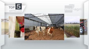 Reportage aux Pays-Bas, ensilage de maïs et essai d'un Manitou au top de l'actu