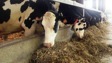 36,2% des éleveurs se débrouillent seuls pour élaborer la ration