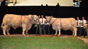Le Gaec Micaud réalise le doublé des champions du concours charolais