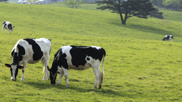 Lactel sort son nouveau lait demi-écrémé : «l'appel des prés»