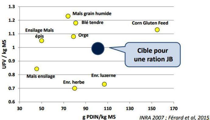 Pour l'engraissement des jeunes bovins, il est essentiel d'avoir des rations à haute densité énergétique