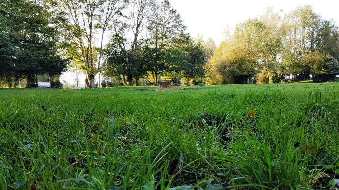 L'herbe doit être pâturée rase à l'automne afin d'affronter l'hiver et de repousser normalement au printemps suivant