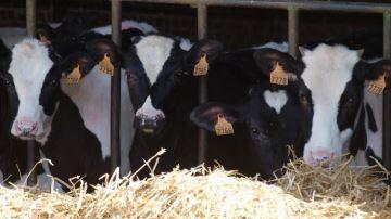 Peu d'éleveurs se soucient de cet enjeu qui pèse!