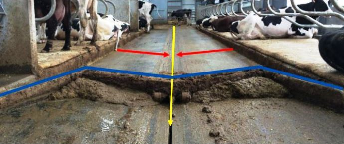 Les sols à pentes transversales nécessitent un racleur en W pour capter le lisier par demi couloir et limiter le massage du lisier dans le canal lors du raclage