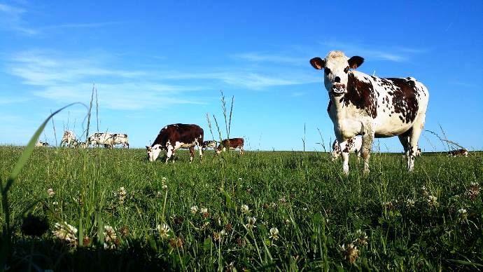 Le passage à l'agriculture biologique en élevage laitier suscite beaucoup de questions. Dans le cadre des «bios pratiquent», trois éleveurs ont témoigné de leurs craintes et motivations