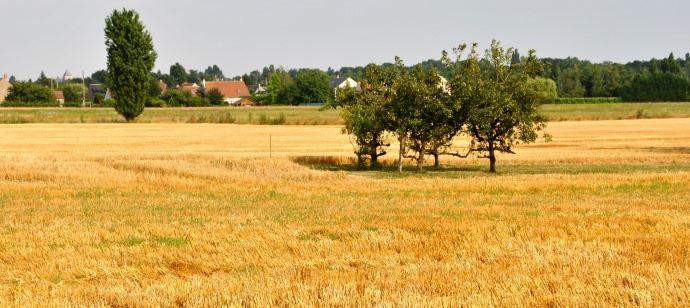 Zone agricole protégée de Chécy
