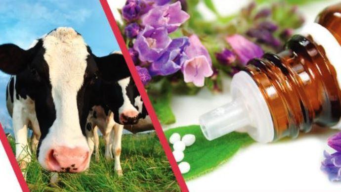 Portes ouvertes dans des exploitations du Pas-de-Calais concernant les médecines alternatives en élevage