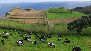 Le programme européen pour un secteur laitier plus résilient et durable