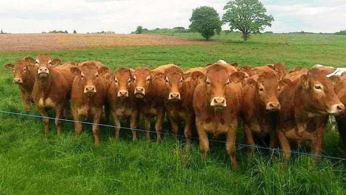 Les formations de génétique en bovins viande de l'institut de l'élevage