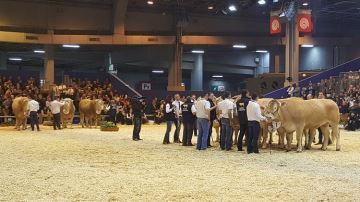 De moins en moins d'éleveurs s'intéressent aux concours bovins