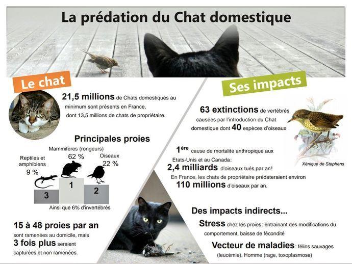 La prédation du Chat domestique (Felis silvestris catus) Geoca