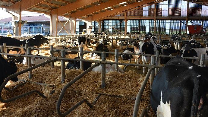 Grosse structure laitière
