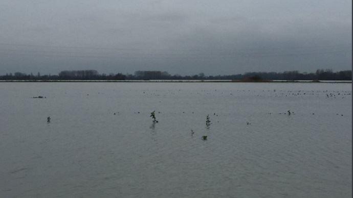 Inondations dans les champs de Damien Collignon