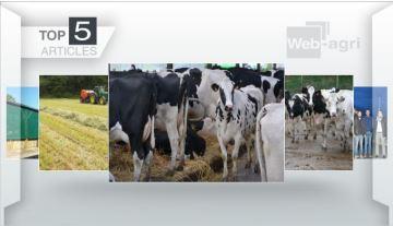 Récolte du foin et comportement des bovins: deux sujets majeurs de la semaine