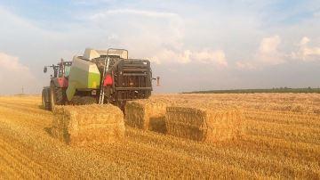 Cette année, près de la moitié des éleveurs achètent de la paille