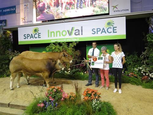 Prix de championnat femelles suitée de la race parthenaise.