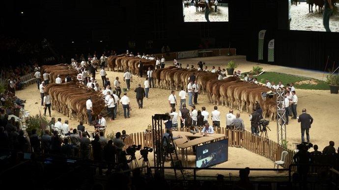 750 bovins viande et 550 bovins lait seront en compétition durant les 3 jours du Sommet de l'élevage