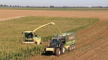 Bien éclater le grain de maïs augmente la digestibilité de l'amidon