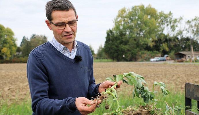 «La féverole permet de nourrir le sol et d'économiser des intrants chimiques.