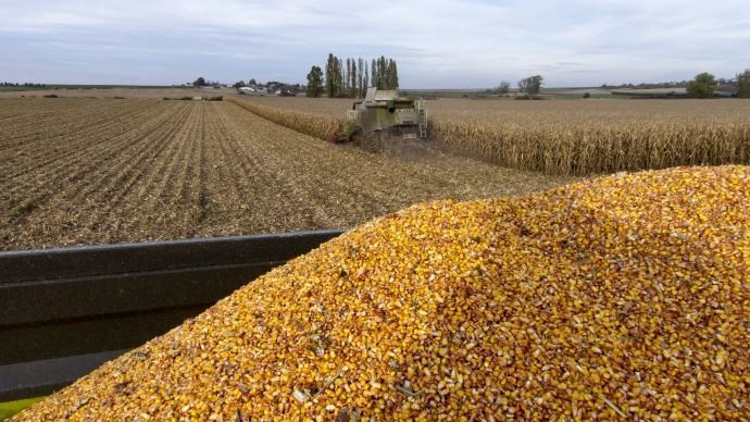Récolte maïs grain