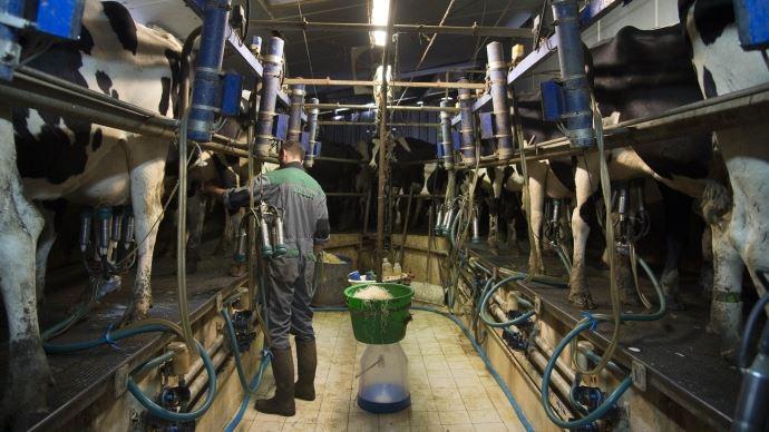 La oollecte laitière française est en recul de 5% par rapport à l'an passé.