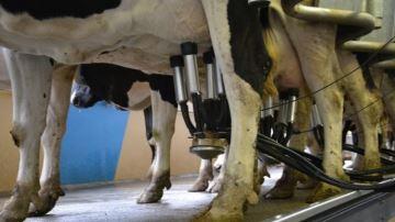75% des éleveurs laitiers réalisent encore du contrôle de performance