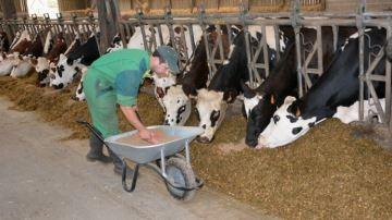 Faut-il une complémentation spécifique pour les débuts de lactation?