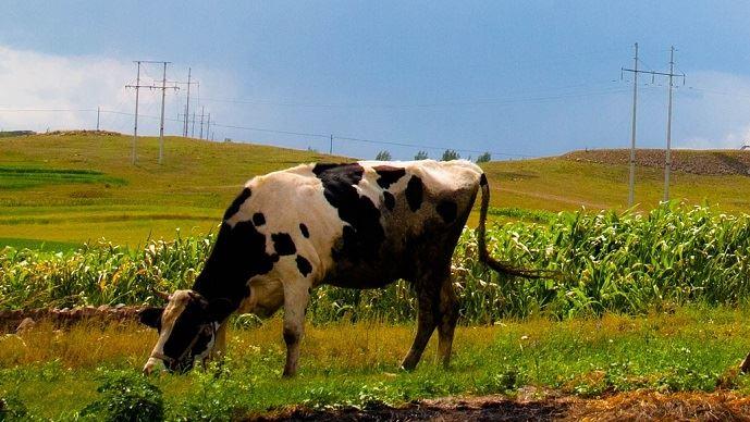 Suite au recensement agricole mené en 2016, les chiffres des productions animales chinoises de ces 10 dernières années ont été revues à la baisse.
