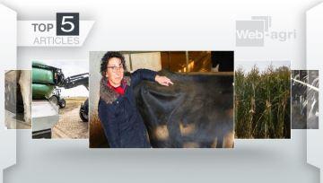Produire plus de lait et savoirgérer la main d'½uvre en élevage laitier en Une