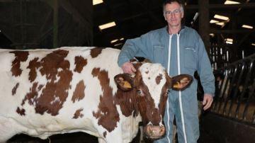 H. Dion (60) : «Des animaux croisés productifs adaptés à un système intensif»
