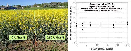 Comparaison de fertilisation colza