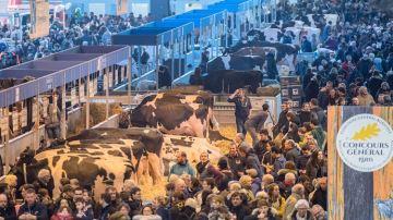 Retrouvez les palmarès et les replays des concours bovins
