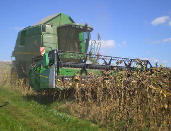Récolte de tournesol réalisée avec une coupé céréales