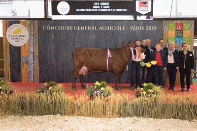 Hématie est la grande championne de la race Rouge Flamande.