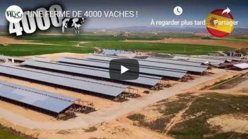 Hugo Lucas visite une ferme de 4000 vaches laitières!