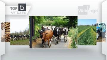 Les ensilages d'herbe et les nouveaux tracteurs T6 NewHolland à la Une