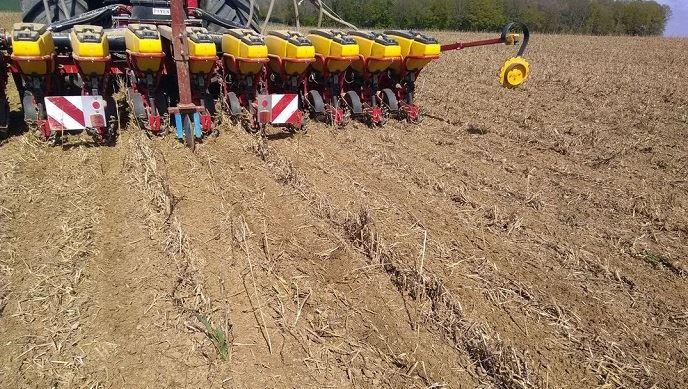 Semis de maïs après strip-till