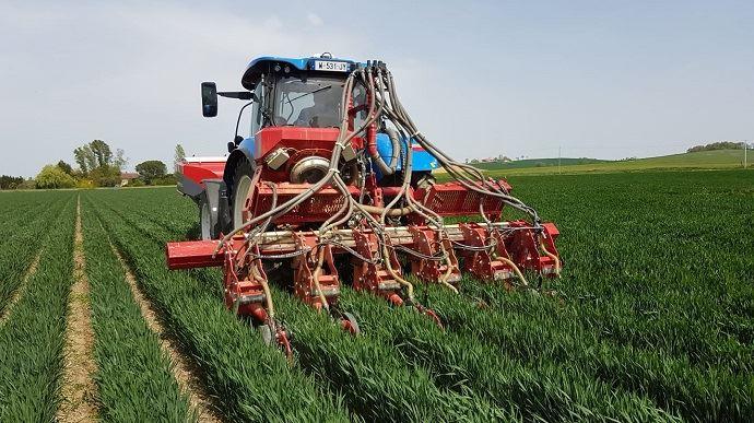 Semis de soja dans le blé