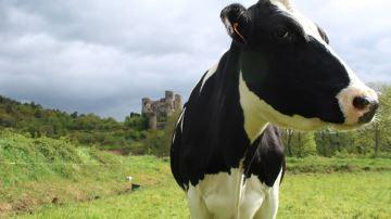 Le Cniel confirme de bonnes perspectives pour les produits laitiers en 2019