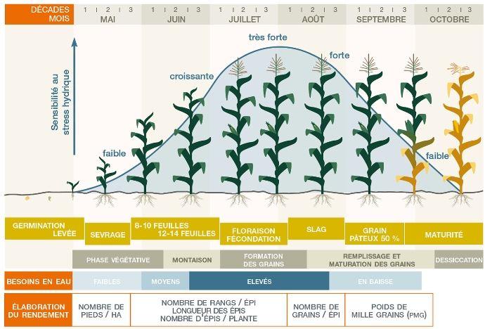 Graphique apport hydrique maïs