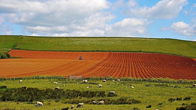 Le prix des terres et prés libres est resté stable en 2018, à 5990€/ha en moyenne.