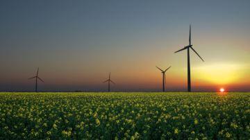 Le photovoltaïque reste l'énergie renouvelable privilégiée des agriculteurs