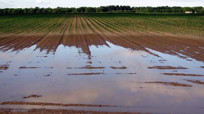 Les pluies américaines dégradent les cultures d'hiver