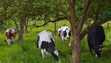 87% des éleveurs se sentent concernés par les enjeux climatiques