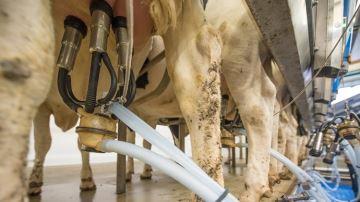 Piloter l'alimentation du troupeau par le profil en acides gras du lait