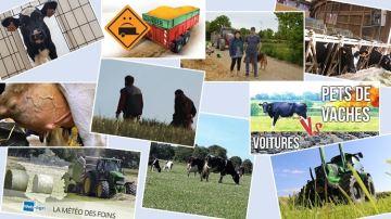 Les 10 infos élevage les plus lues depuis le début de l'année